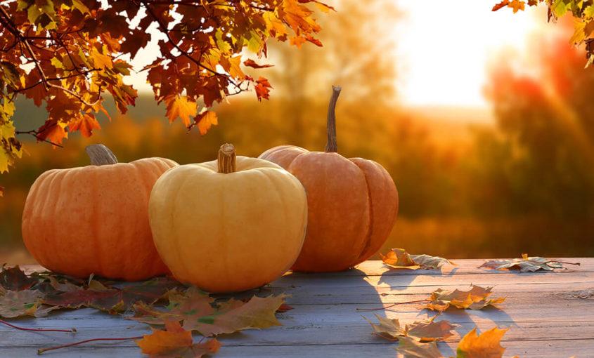 MEDSource - November Newsletter - Happy Thanksgiving